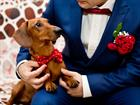 Is there anything more adorable than animals joining in the wedding fun?